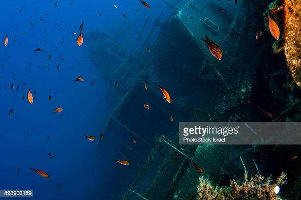 scuba diving at the ms zenobia shipwreck - insel zypern stock-fotos und bilder