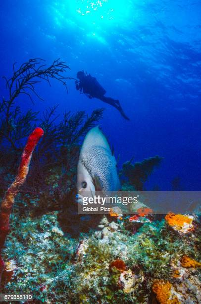 Buceo - Bahamas
