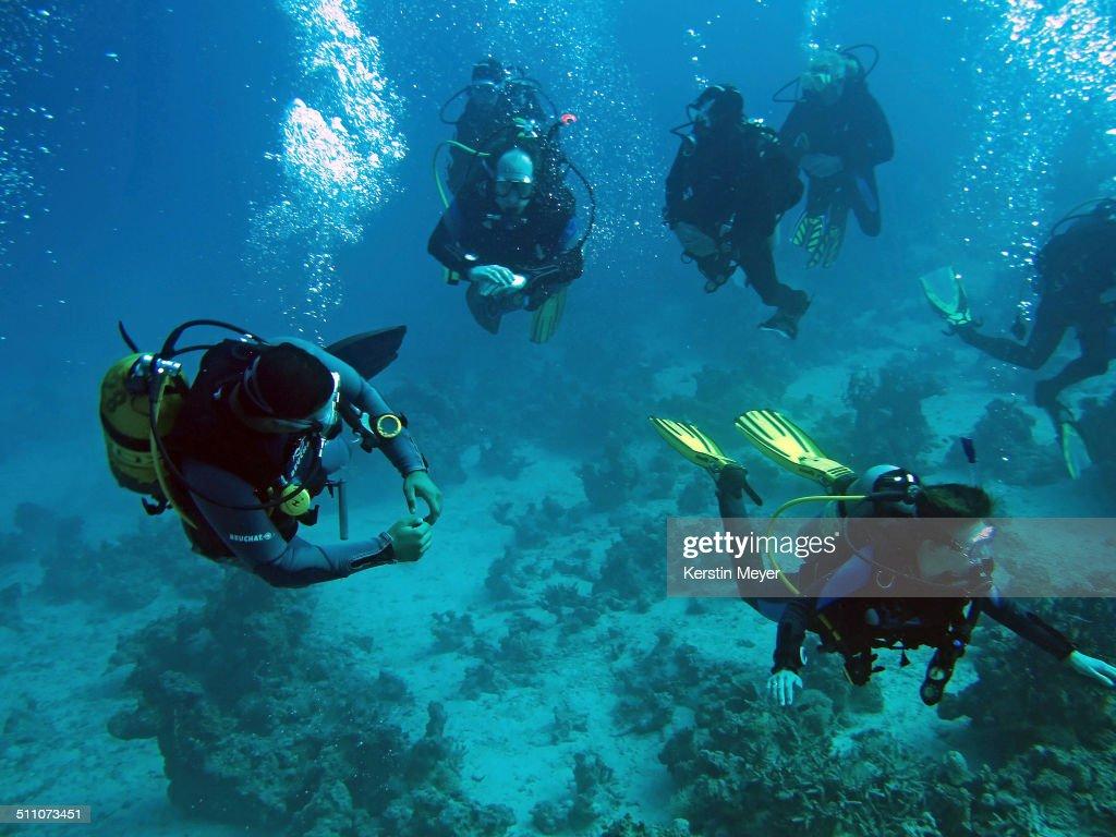 Underwater Scenes : News Photo