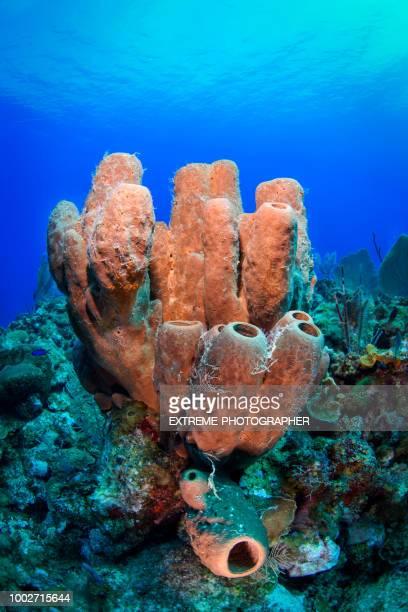 scuba diving - cnidarian stock photos and pictures