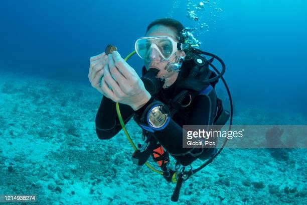 duiken speurtocht - vinden stockfoto's en -beelden