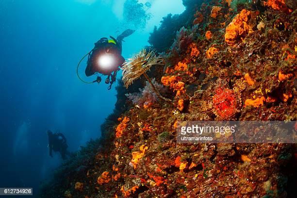 scuba diving  sea life  red scorpionfish   spral tubeworm  orange sponge - red tube worm fotografías e imágenes de stock