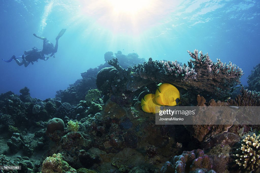 Scuba Diving with Fish : Stock Photo