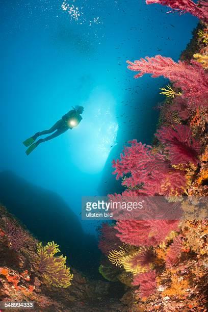 Scuba Divng at Medes Islands Carall Bernat Costa Brava Mediterranean Sea Spain