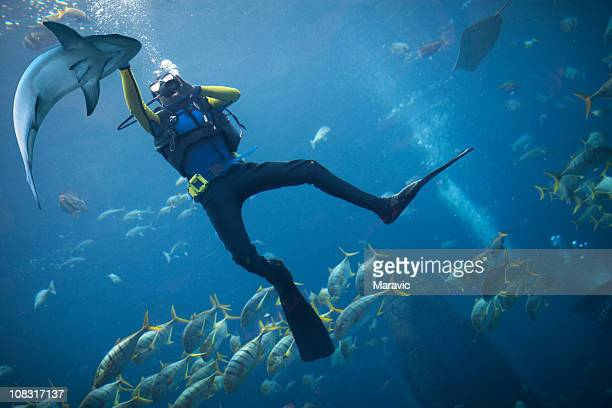 scubadiving - shark stock pictures, royalty-free photos & images