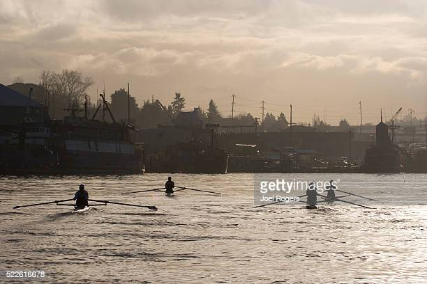 sculling practice in the lake washington ship canal in seattle - joel rogers stock pictures, royalty-free photos & images