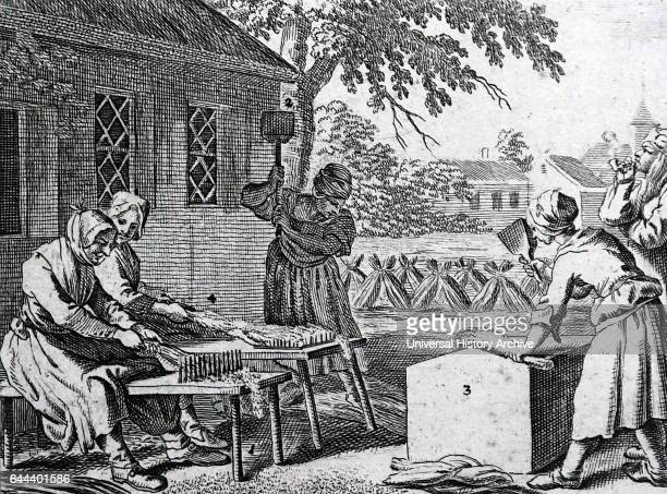 Scutching flax Engraving after Daniel Nicolas Chodowiecki Scutching is a step in the processing of cotton or the dressing of flax in preparation for...