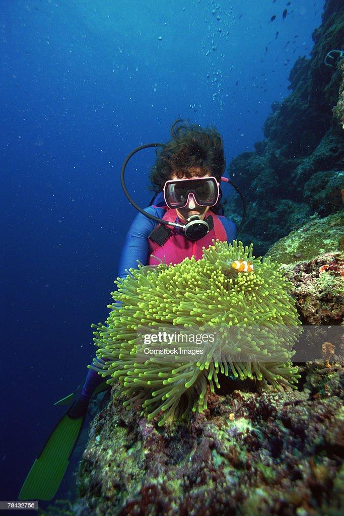 Sea Anemone and diver : Stockfoto