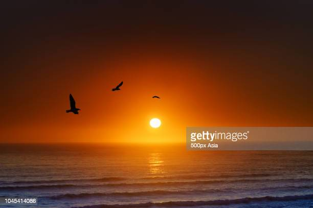 sea at sunset, new zealand - image stock pictures, royalty-free photos & images