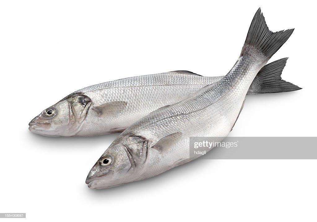 Sea Bass : Stock Photo