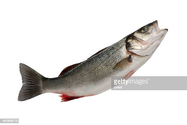 sea bass - fish stock pictures, royalty-free photos & images