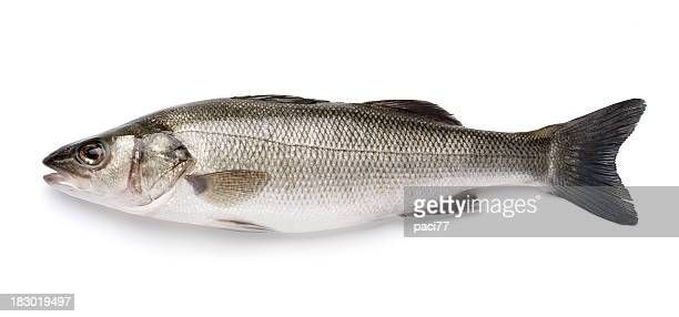 sea bass with clipping path - one animal stock pictures, royalty-free photos & images