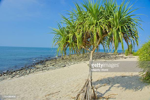 Sea beach of Saint Martins Island at Teknaf in Coxs Bazar It is the only coral island of Bangladesh and one of the famous tourist destinations of the...