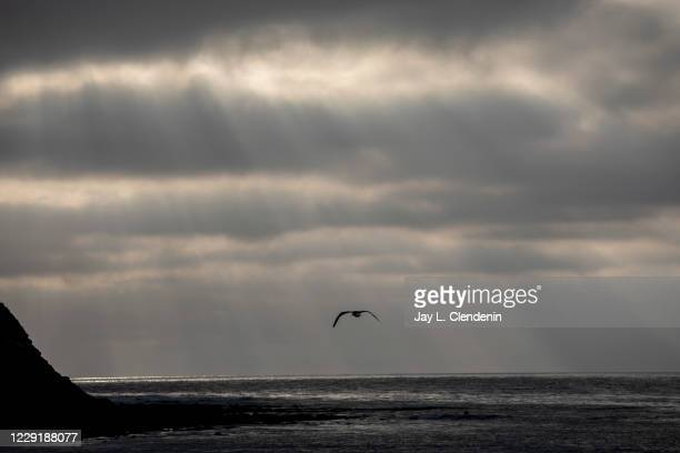 Sea bird flies across scattered light parting the clouds near Rat Beach, in Palos Verdes Estates, CA, Monday, Oct. 19, 2020.
