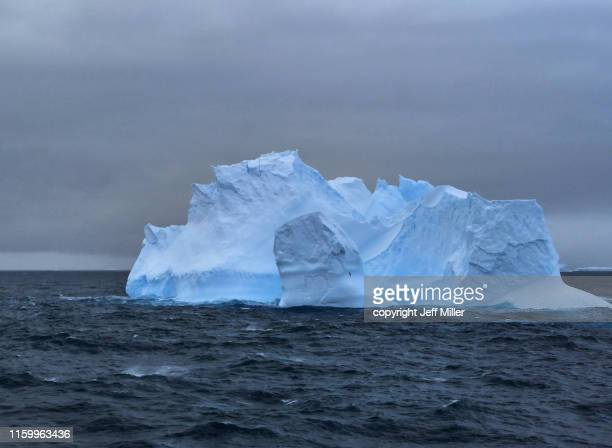 sea bird flies in front of iceberg, near davis station, southern ocean, antarctica - pack ice stock pictures, royalty-free photos & images