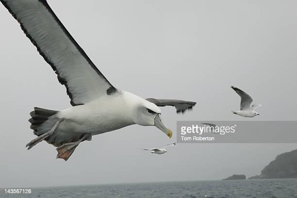 Sea bird flying over ocean