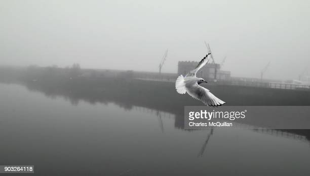 A sea bird flys through the heavy fog as the new Northern Ireland Secretary of State Karen Bradley addresses the media on her first visit to the...