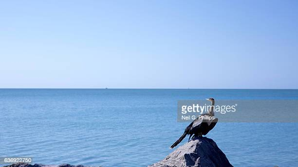 Sea bird standing on a rock looking out to sea December 3 2016 in Venice Florida