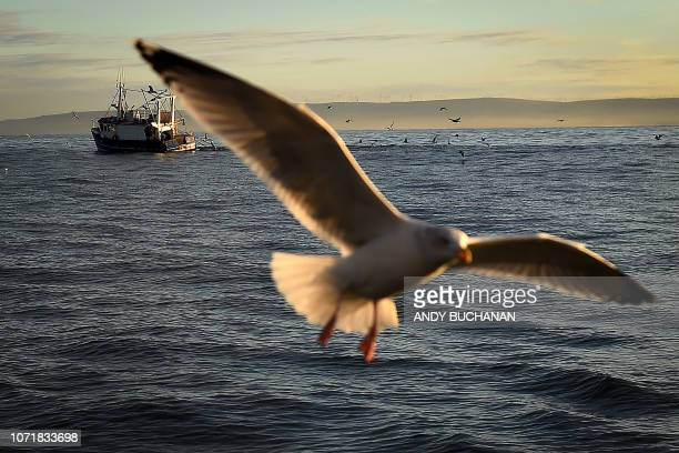 Sea birds and fishing vessels are seen in the North Sea off the east coast of Scotland on December 10 2018 in a photograph taken from the fishing...