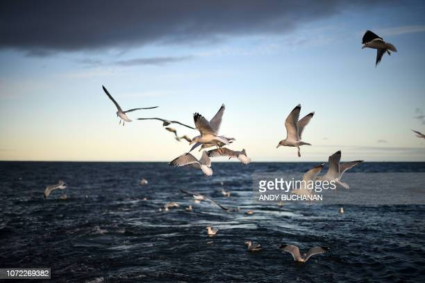 Sea birds are seen over the North Sea off the east coast of Scotland on December 10 2018 in a photograph taken from the fishing trawler 'Scotia Star'...
