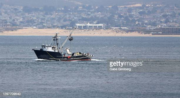 sea birds chasing a fishing boat - pismo beach stock pictures, royalty-free photos & images
