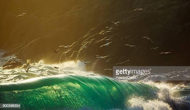 Gli uccelli marini volano sopra grande rottura tempesta onde