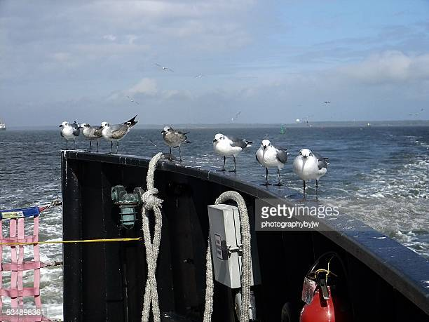 sea birds hitching a ride - southport north carolina ストックフォトと画像