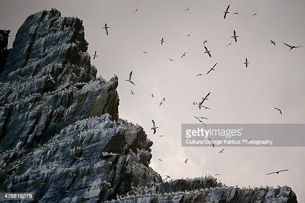Sea birds roosting on cliffs