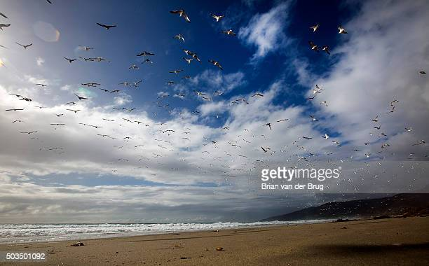 Sea birds take flight between bands of moisture as a storm clears off the coast at Zuma Beach in Malibu Calif on Jan 5 2016