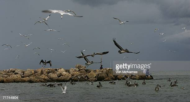 Sea birds take flight near a fishing pier off as storm clouds from Tropical Storm Ernesto approach from the south Captiva Island Florida Though the...