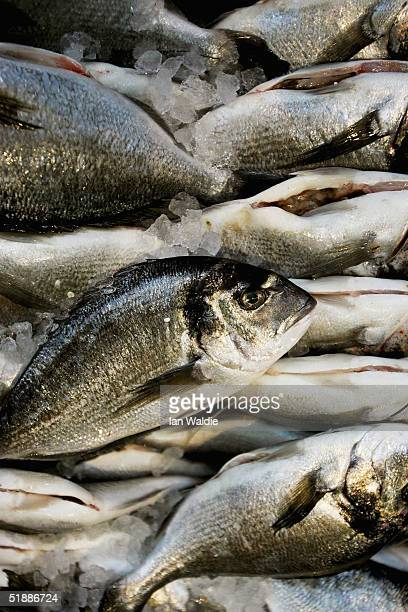 Sea Bream are displayed at a fishmongers stall at Borough Market on December 22 2004 in London England The European Union has agreed new fishing...