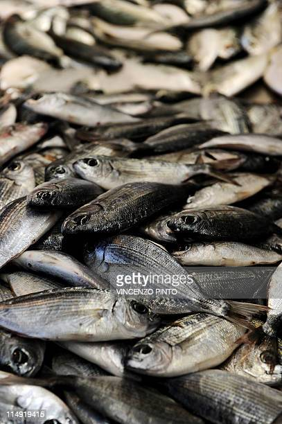 Sea bream are displayed during Italy's Slow Fish event in Genoa on May 28 2011 Small scale fishers threatened by industrial fishing have gathered...