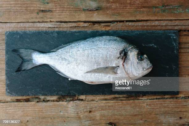 Sea Bream on a slate board