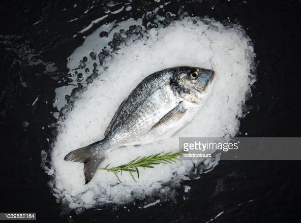 sea bream on ice - crushed ice stock pictures, royalty-free photos & images