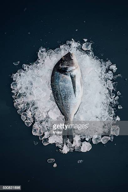 Sea bream on ice seafood still life