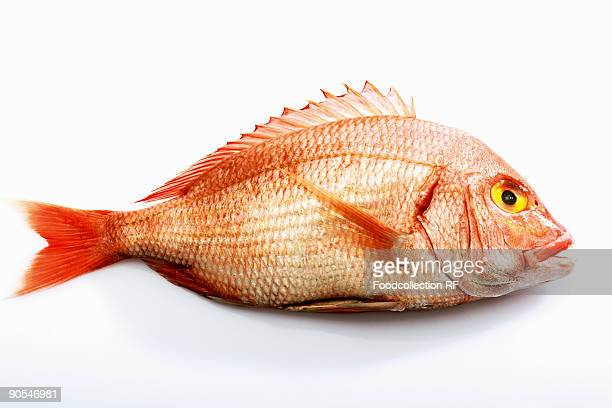 Sea bream on white background, close up