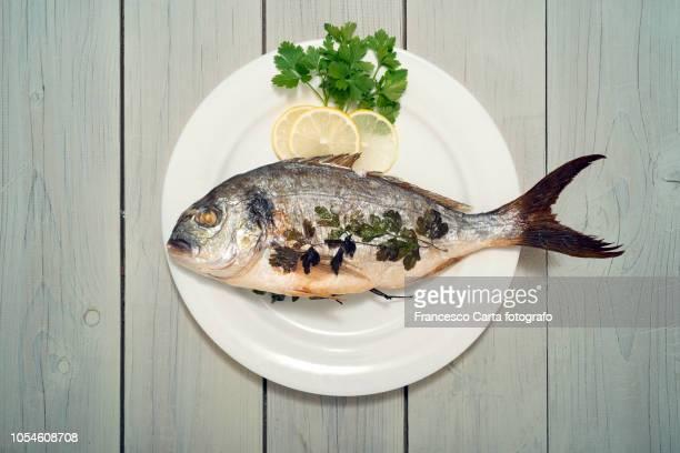 sea bream - poisson photos et images de collection