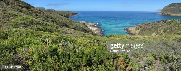 sea cliffs at tasman national park tasman  peninsula tasmania australia - rafael ben ari stock pictures, royalty-free photos & images