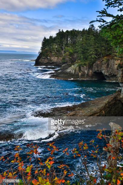 sea coast at cape flattery, washington state, usa - cape flattery stock photos and pictures