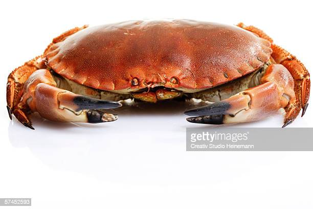 sea crab - crab stock photos and pictures