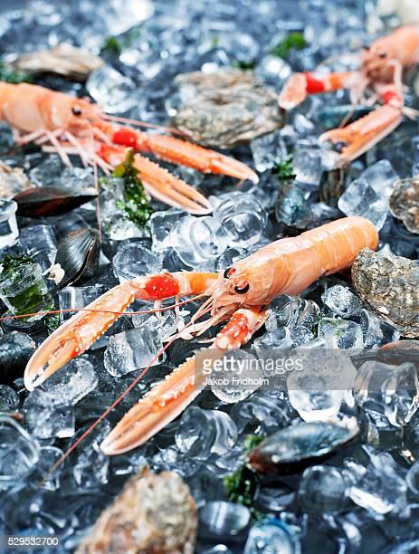 Sea crayfish on ice cubes