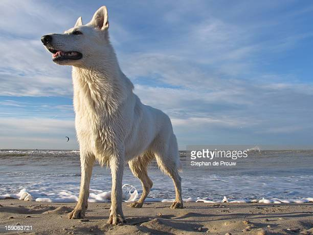 sea dog - stephan de prouw stock pictures, royalty-free photos & images
