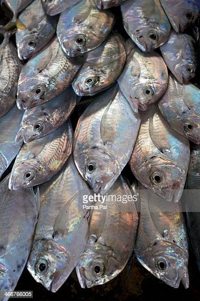 Sea Fish selling in local market,Havelock