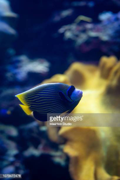 sea fish underwater - organismo acuático fotografías e imágenes de stock