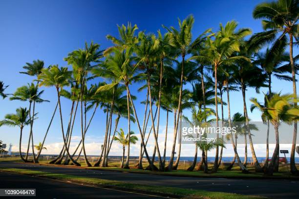 sea front with palm trees, hilo, big island, hawai'i, hawaii, usa - big island hawaii islands stock pictures, royalty-free photos & images