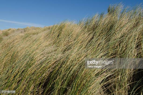 Sea grass and clear sky