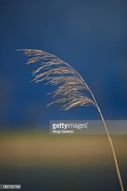 sea grass - altug karakoc - fotografias e filmes do acervo
