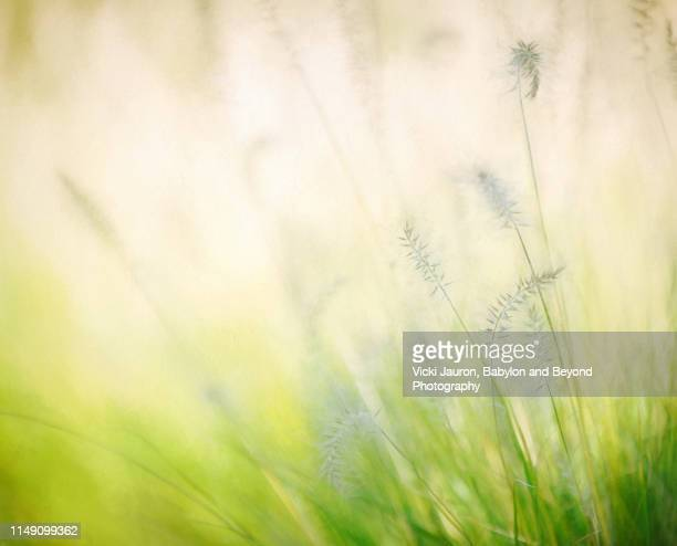 sea grass soft colors and tranquility in east hampton - east hampton stock pictures, royalty-free photos & images