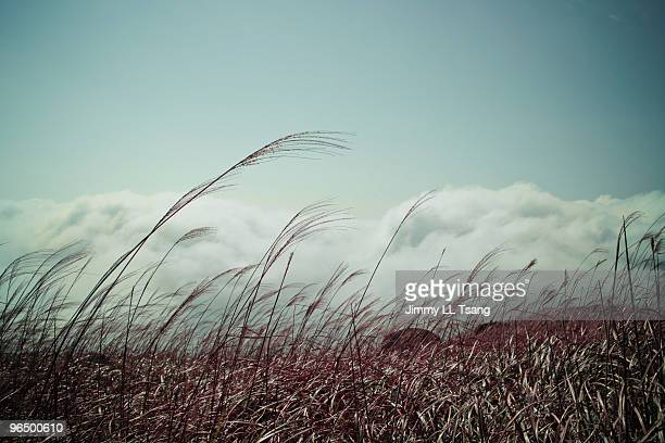 Sea grass with clouds