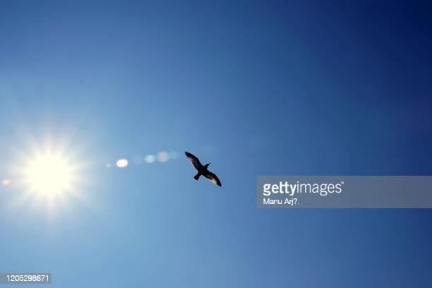 sea gull - 翼を広げる ストックフォトと画像